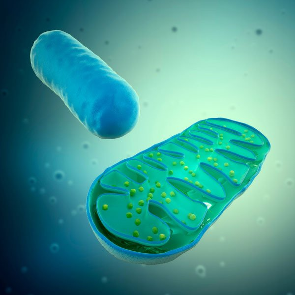 RS Labs Health Energy Mitochondria and ATP Health 1 600x600 1