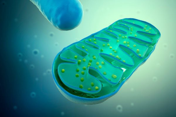 RS Labs Health Improve Your Life Mitochondria 600x400 1